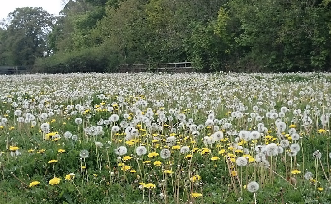 Field of clocks
